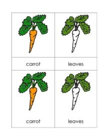 CarrotNomenclatureCards