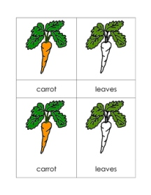 CarrotNomenclatureCards