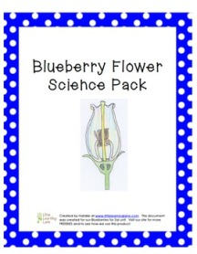 BlueberryFlowerPack1