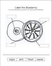 BlueberryFruit4