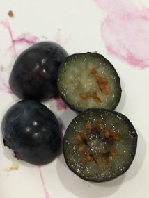 blueberryscience1