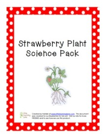 StrawberryPlantPack1