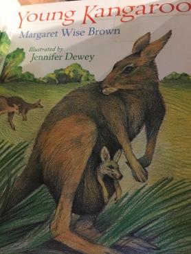 book_kangaroo1