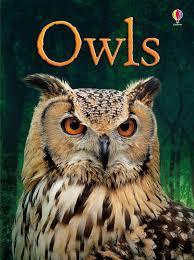 Usborne Owls.jpeg